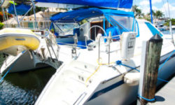 Privilege Catamaran TELLY PENGUIN for sale
